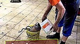 Limpiador de catalizador